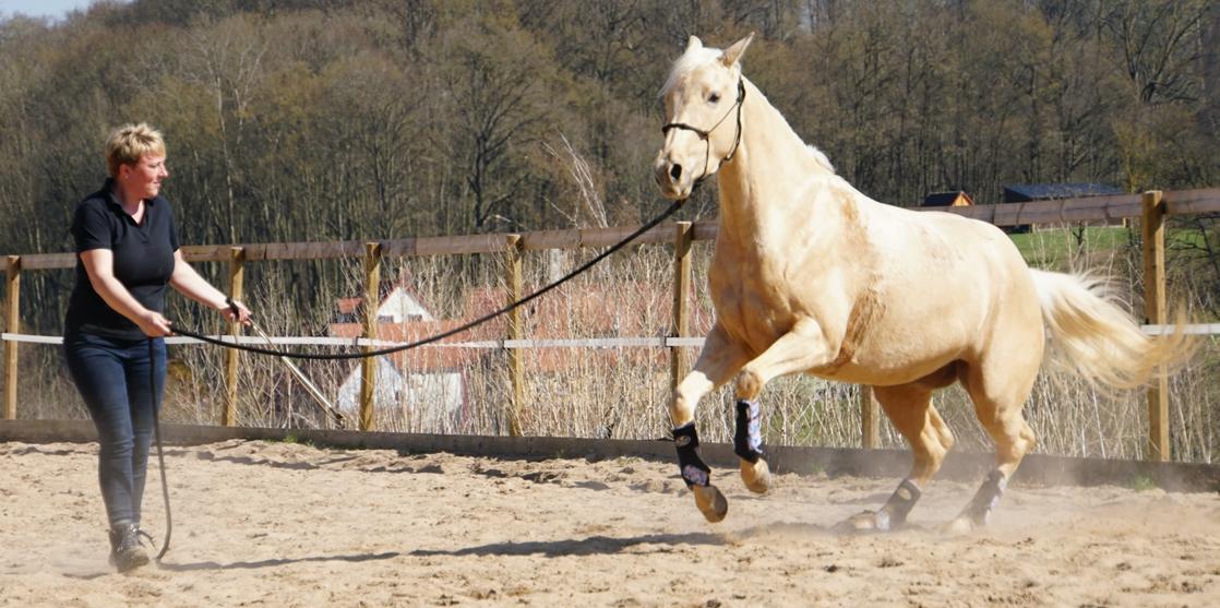 Tanja_Buck_Beritt_Pferdeausbildung