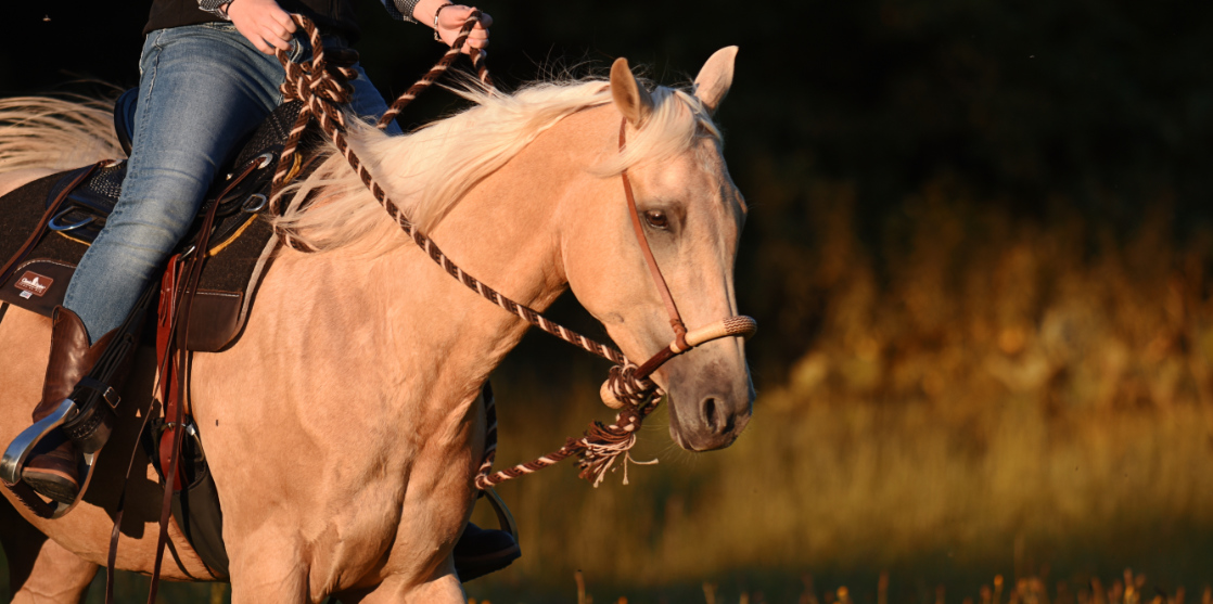 Horsemanship_Workshop_Ansbach